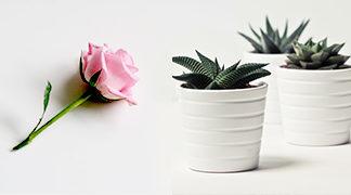 Flowers & Pot Plants