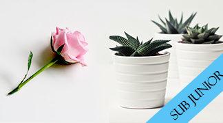 Sub Junior Flowers & Pot Plants